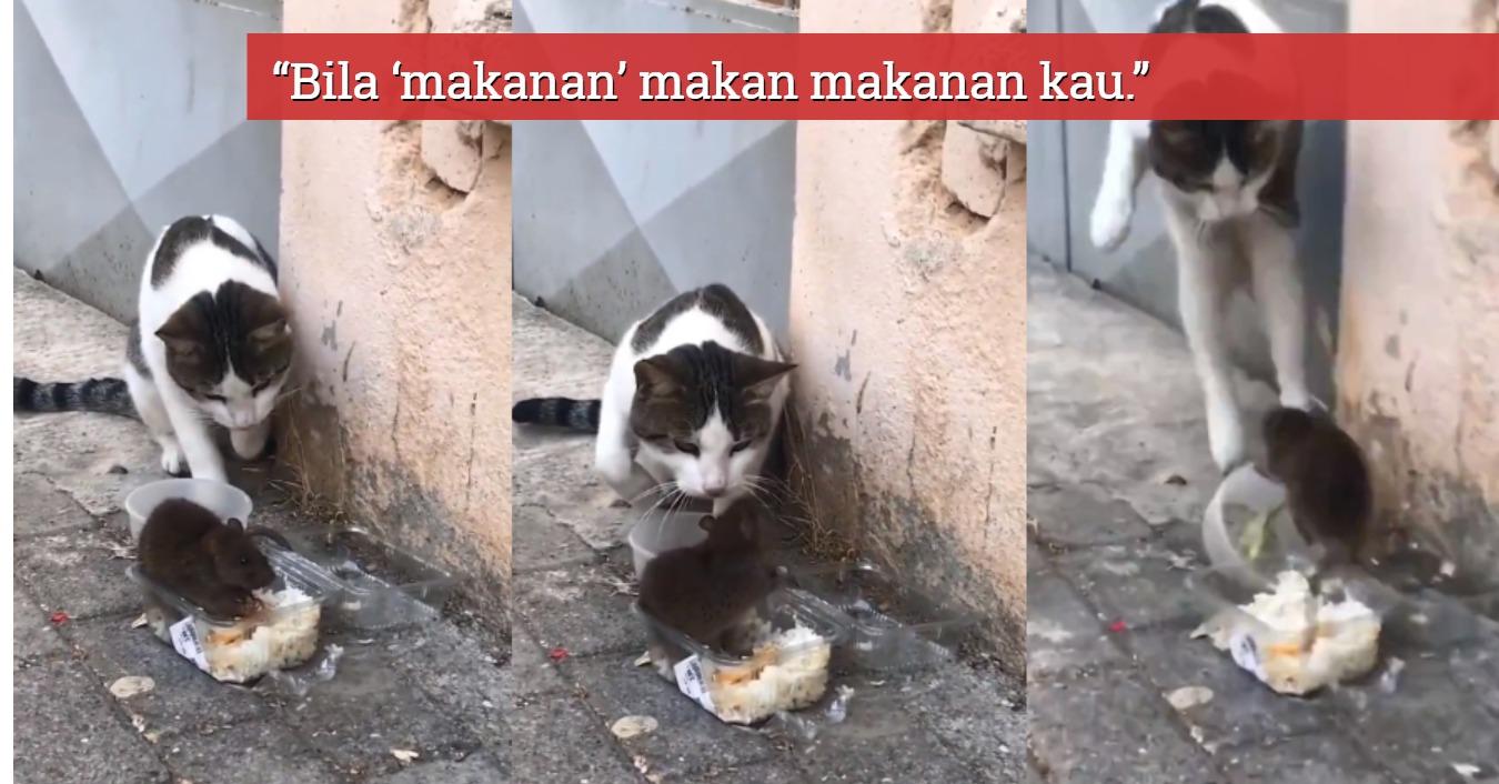 kucing disergah tikus